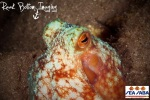 Photo by Andrew Raak; this is one of the critters we saw diving - octopus!